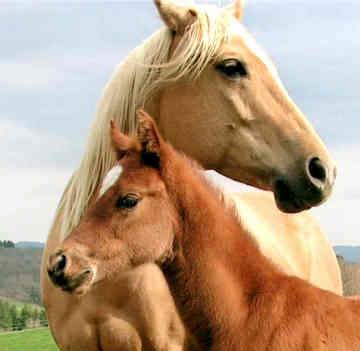 animal-healing-horses.jpg